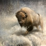 Ewoud de Groot - Bison - oil on canvas - 43 x 43