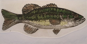 Largemouth Bass - Cathey December