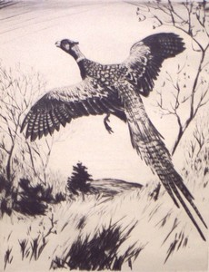 Churchill Ettinger - Pheasant - etching/drypoint - 11 x 8.5