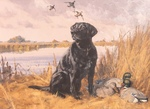 Eldridge Hardie - Black Lab - oil on canvas - 16 x 22