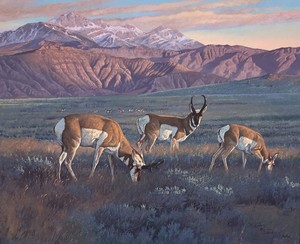 Hayden Lambson - Antelope - oil on panel - 24 x 30