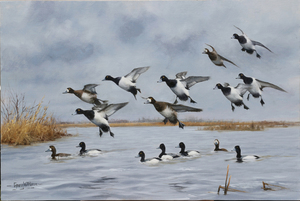 Gary Moss - A Bluebill Day - oil on linen - 24 x 36