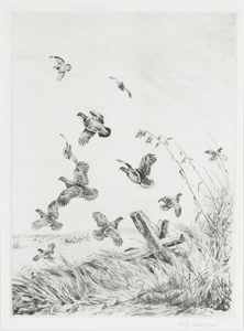 William Schaldach - A Covey of Quail - etching/drypoint - 11.75 x 8.75