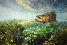 June 15th through July 14th Hooked: Angling Art Exhibition