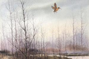 David Hagerbaumer - American Woodcock