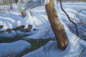 Mark Susinno - Snowy